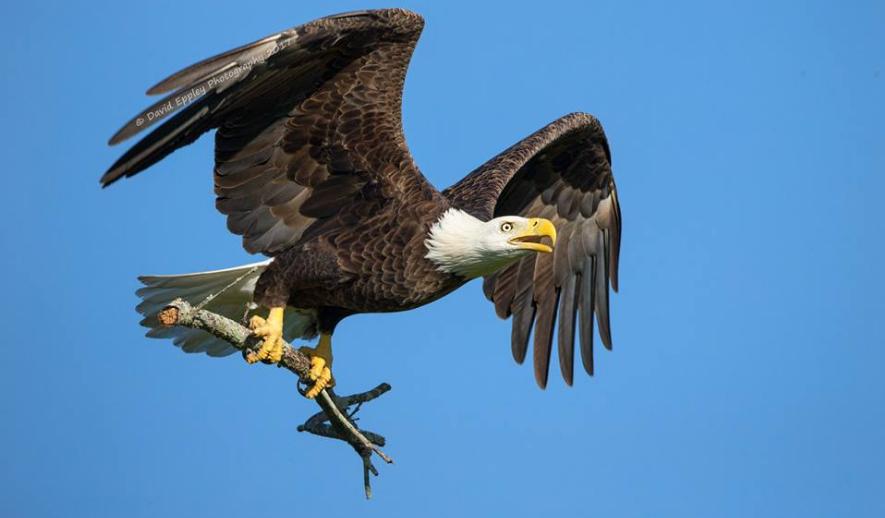 Harriet a M15 – návštěvníci u hnízda