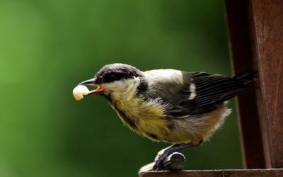 Ptačí krmítko kamera u Lesovny