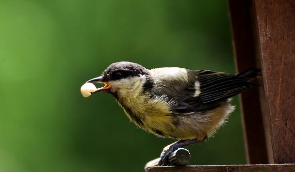 Bird Feeder Camera at Lesovny