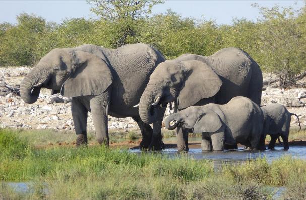 Sloní rodinka u napajedla v Africe