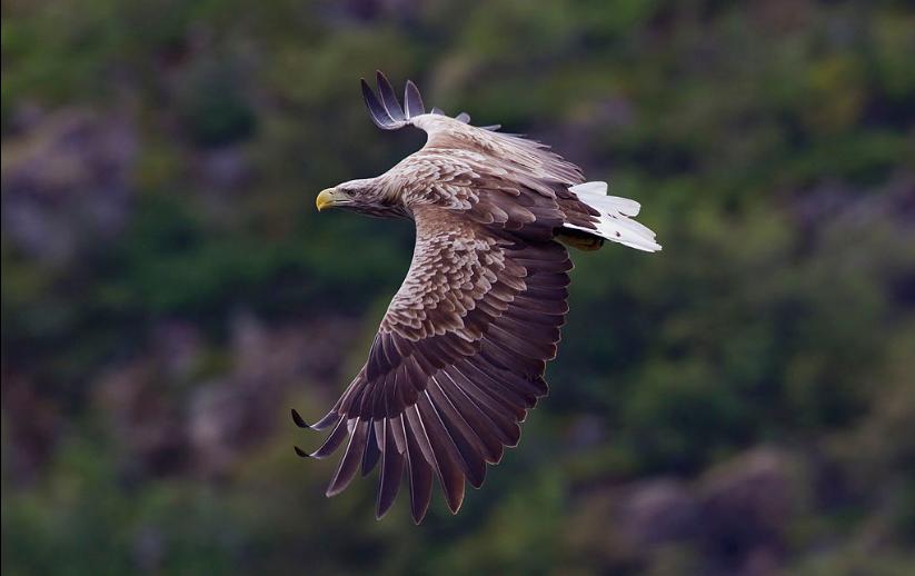 Eagle Webcam aus dem Nest in Ungarn