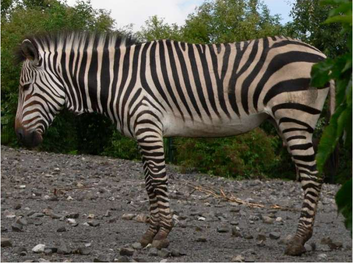 Película documental de Zebra Hartmann