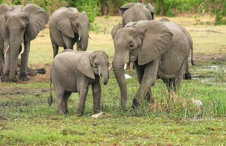 Sloni v Keni