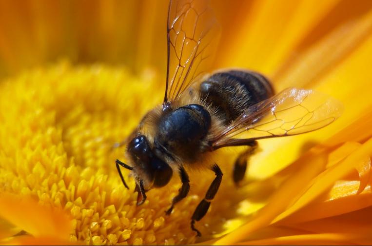 Abejas documentales de miel