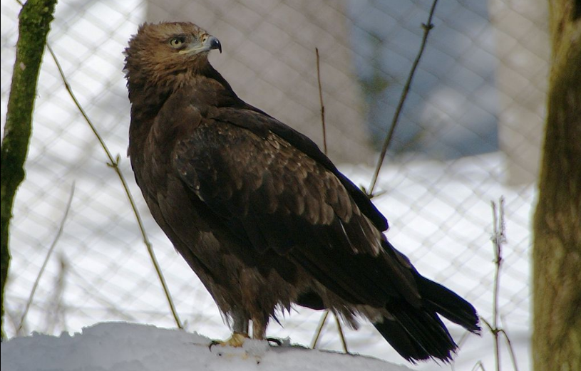 Eagle Sagittarius - webcam de Estonia