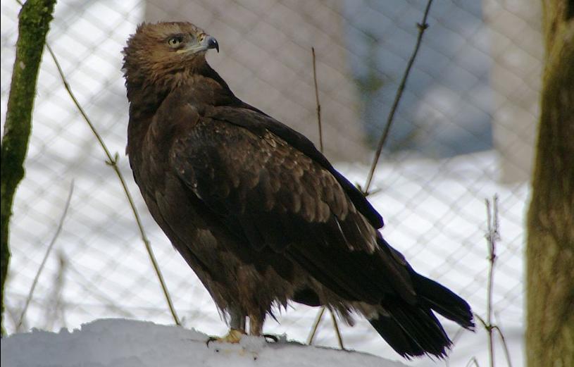 Eagle Sagittarius - webcam from Estonia