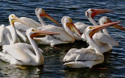 Vogelinsel auf dem Mississippi