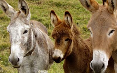 Donkey Stage - webcam