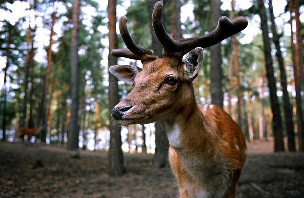 Wildlife feedstock