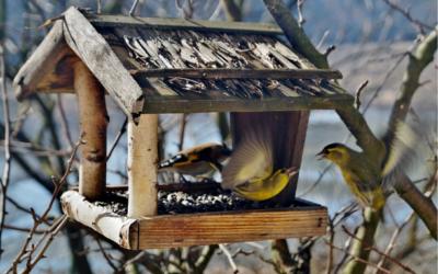تغذية الطيور - كاميرا ويب اسبانيا