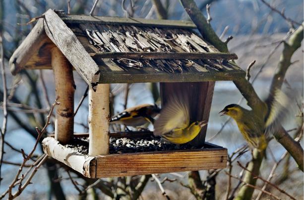 Vogelfutterspender - Webcam Spanien