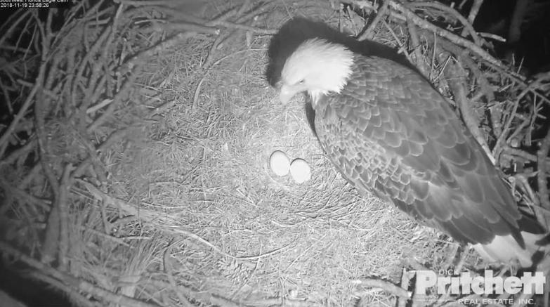 Harriet snesla druhé vajíčko!