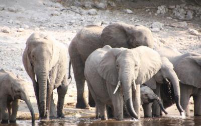 Napajedlo v národním parku Tembe Elephant Park