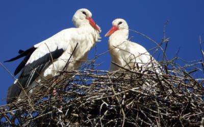 Stork's Nest Sazava