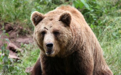 Krmeliště volně žijících živočichů – webkamera Transylvánie