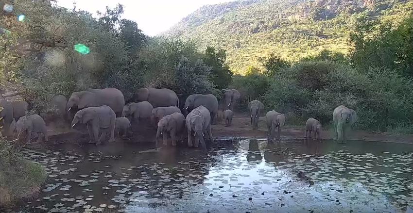 Napajedlo Kwa Maritane – afriká divočina