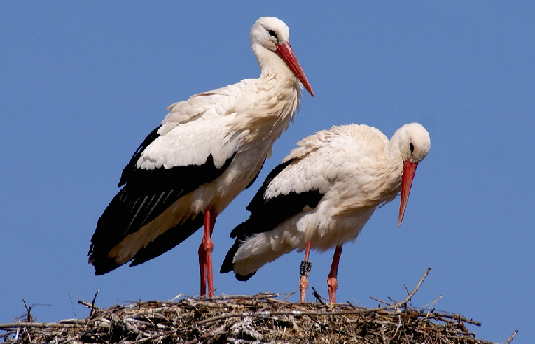 Stork's Nest - Suwalki Nature Park