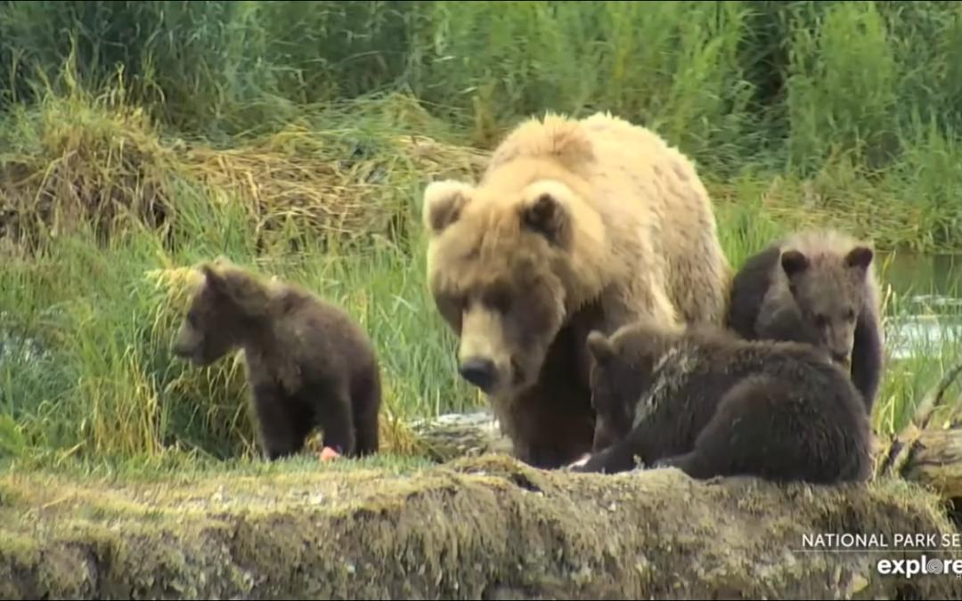 Ráj medvědů – Aljaška