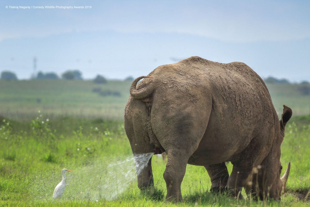 Fotky z mezinárodní fotosoutěže Comedy Wildlife Photography