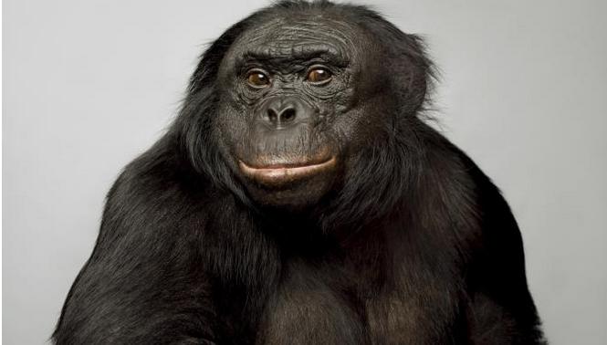 Zvířata jsou chytřejší, než jsme si mysleli. Podívejte se na 14 zvířat, která nám ukázala svou inteligenci.