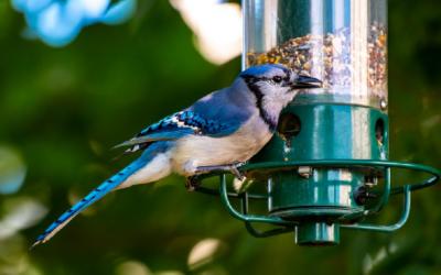 Mangiatoie per uccelli - Alabama