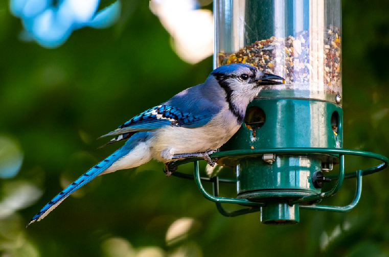 Bird Feeders - Alabama