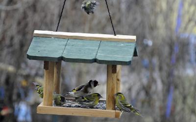 Mangiatoia per uccelli - Canada