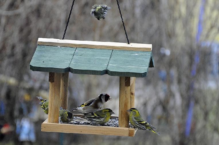 Ptačí krmítko – Kanada