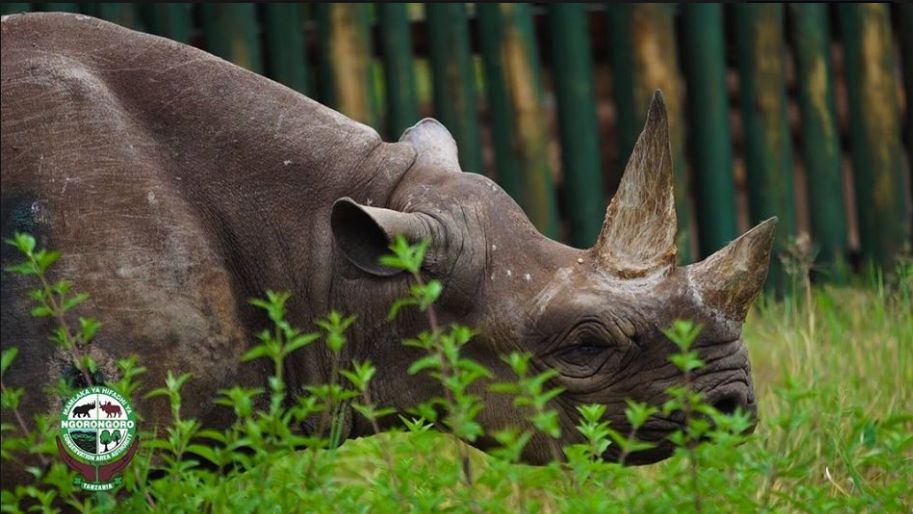 The oldest black rhino in the world died. The female Fausta was 57 years old.