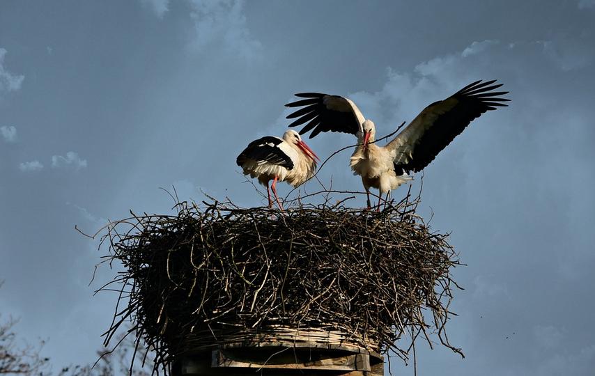 Stork's nest in Bohuslavice