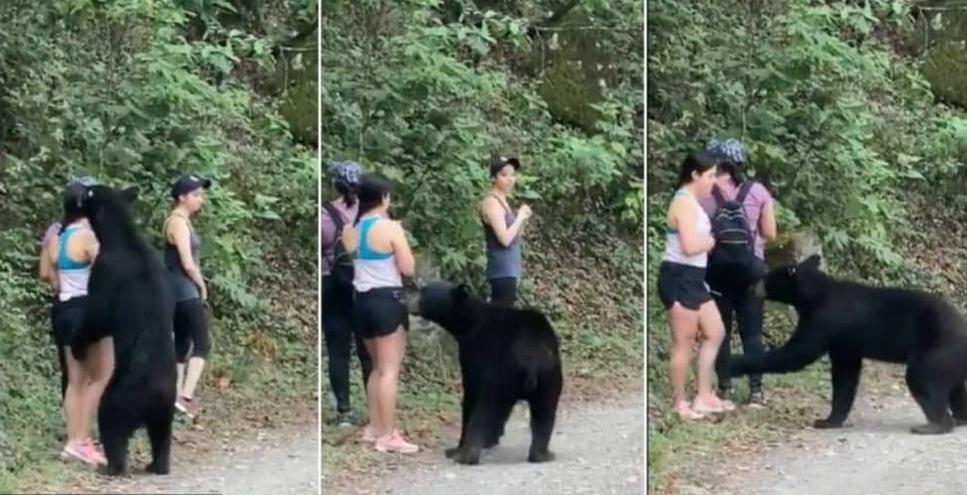 Turistku na výletě překvapil medvěd, pořídila si s ním selfie
