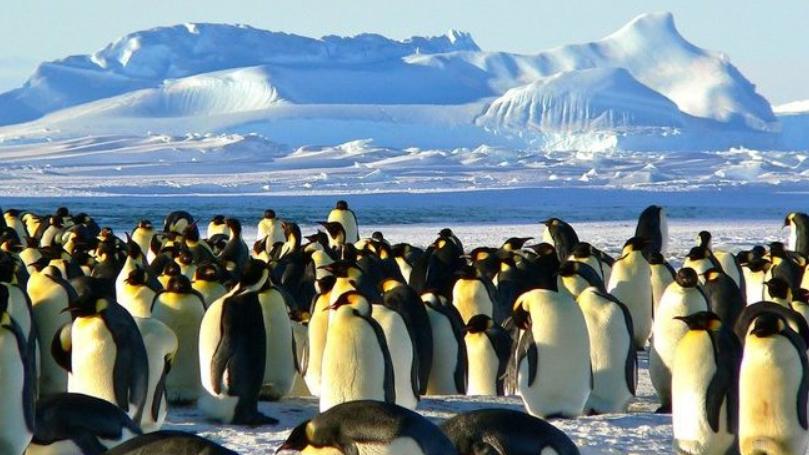 Vědci v Antarktidě objevili nové kolonie tučňáků