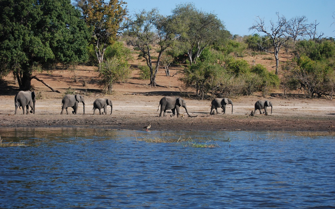 Řeka Olifants, Krugerův NP