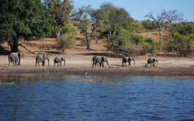 Río Olifants, Parque Nacional Kruger