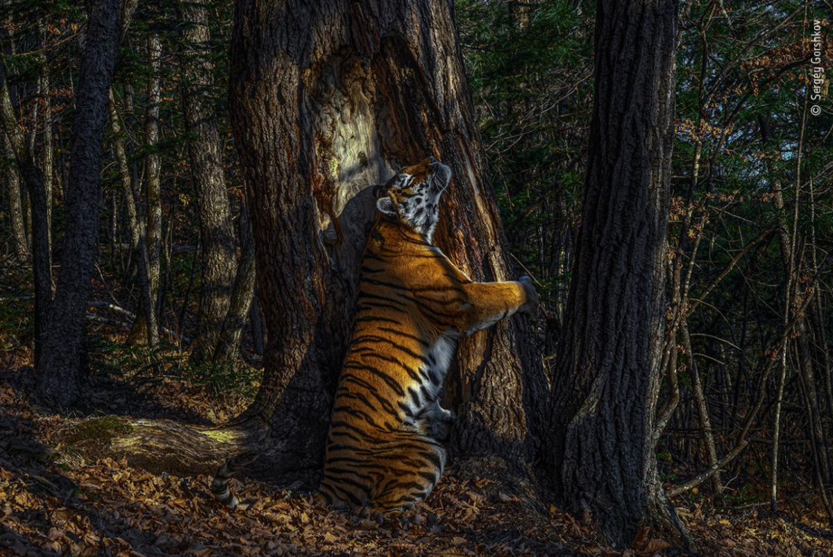 The best nature photos of 2020