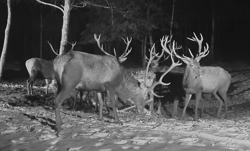 Estonské krmeliště jelenů – vidozáznamy