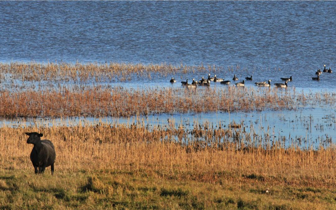 Národní park Matsalu – Estonsko