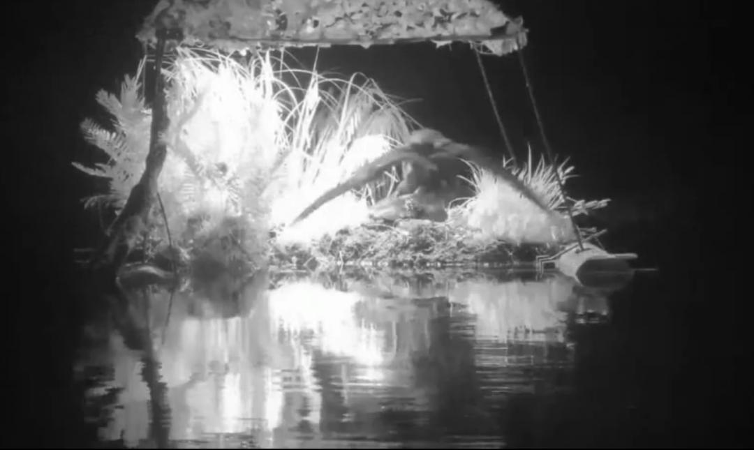 Drama v hnízdě potáplic ledních