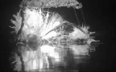 Drama no ninho de mergulhadores de gelo