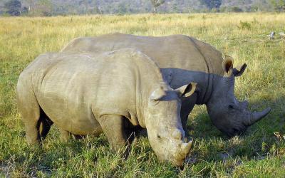 Rehabilitační centrum nosorožců – Hoedspruit, Jižní Afrika