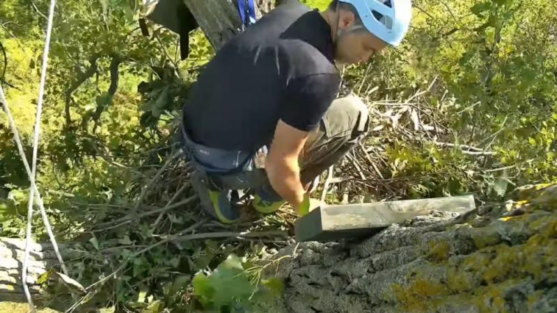 Nové hnízdo orlů bělohlavých v Decorah