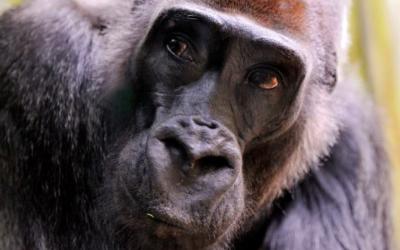 Smutná zpráva z královédvorské zoo